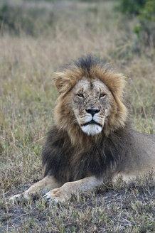 Africa, Kenya, Lions sitting at Maasai Mara National Reserve - CB000165
