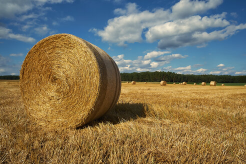 Germany, Bavaria, Nurnberg, View of rolled up bales on field - DIKF000072