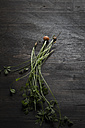 Fresh baby carrots with stems and leaves on wooden board - SBD000182