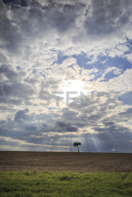 Germany, Bavaria, Coburg, rural lansdscape with a tree - VTF000021 - Val Thoermer/Westend61