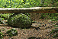 Austria, Lower Austria, Ysper valley, fallen tree on a stone - GFF000254