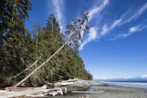 Canada, British Columbia, Vancouver Island, Juan de Fuca Provincial Park - FOF005261