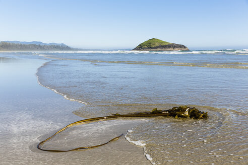 Canada, British Columbia, Vancouver Island, Pacific Rim National Park Reserve of Canada, kelp lying on Long Beach - FOF005293