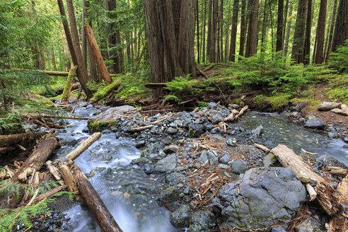 Canada, Vancouver Island, Lupin Falls - FO005324