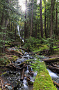 Canada, Vancouver Island, Lupin Falls - FOF005326