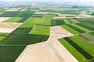 Germany, Rhineland-Palatinate, Ingelheim, View of field landscape, aerial photo - CSF019969