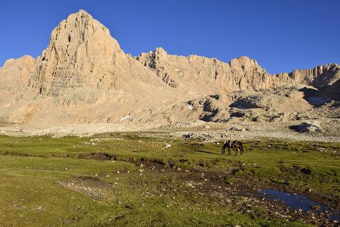 Turkey, High or Anti-Taurus Mountains, Aladaglar National Park, Yedigoeller Plateau, packhorse grazing below Direktas mountain - ES000565