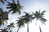 Thailand, Koh Lipe, Coconut palms in sunlight - RNF001272