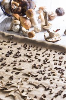 Sliced and whole wild mushrooms like porcinis (Boletus edulis), Leccinum aurantiacum, orange birch bolete (Leccinum versipelle), red pine mushroom (Lactarius deliciosus), birch bolete (Leccinum scabrum), Boletus erythropus drying on baking sheet, studio s - STB000092