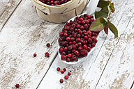 Cranberries (Vaccinium vitis-idaea) in a little basket and on a spoon, studio shot - CSF020276
