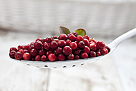 Cranberries (Vaccinium vitis-idaea) on a spoon, studio shot - CSF020279