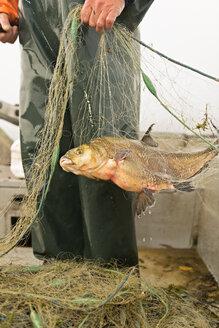 Germany, Baden-Wurttenberg, Lake Constance, Uhldingen-Muhlhofen, fisherman holding freshwater bream - SH000908