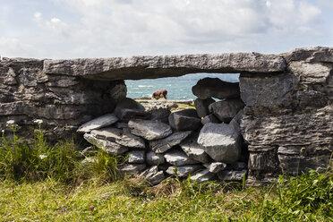Ireland, County Clare, Stone wall at teh ocean near Doolin - SRF000371