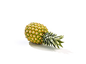 Pineapple (Ananas sativus), studio shot - SRSF000261