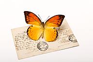 Orange butterfly on postcard - AWDF000711