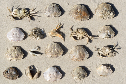 Dead crabs on beach - AWDF000736