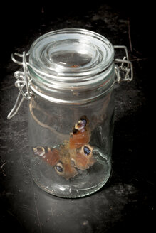Butterfly in preserving jar - AWDF000737
