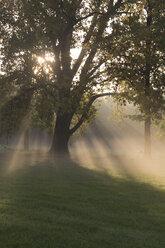 Germany, Bavaria, Landshut, trees and morning mist - SARF000128