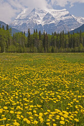Canada, British Columbia, Rocky Mountains, Mount Robson, Mount Robson Provincial Park - UMF000655