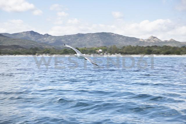 Italy, Sardinia, Flying sea gull - PDF000575