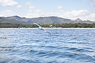 Italy, Sardinia, Flying sea gull - PDF000575