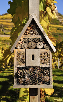 Germany, Saxony, Radebeul, Insect house in front  of vinyard - BTF000295
