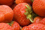 Strawberries (Fragaria), studio shot - WSF000024