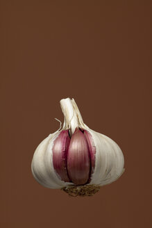 Garlic bulb, studio shot - WSF000030