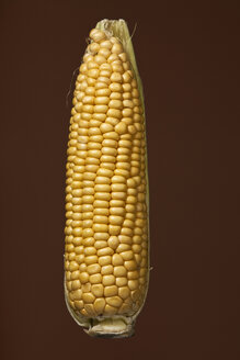 Peeled corn cob, studio shot - WSF000032