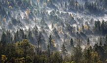 Germany, Bavaria, Upper Bavaria, Icking, Pupplinger Au, forest - LHF000309