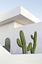 Spain, Lanzarote, Puerto del Carmen, Cactus growing between walls - JATF000440