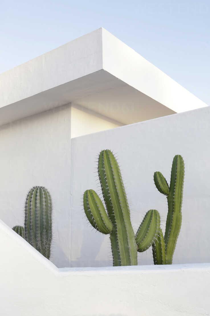 Spain, Lanzarote, Puerto del Carmen, Cactus growing between walls - JATF000440 - Jan Tepass/Westend61