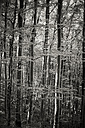Germany, Baden-Wuerttemberg, Beech Forest - EL000648