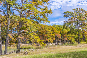 USA, Texas, Concan, Texas Hill Country landscape at autumn, Cypress trees at the Frio River at Garner State Park - ABAF001063