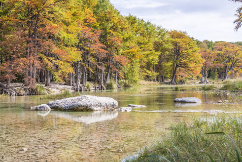 USA, Texas, Concan, Texas Hill Country landscape at autumn, Cypress trees at the Frio River at Garner State Park - ABAF001082