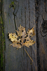 Withered autumn leaf on wooden bench - AXF000573