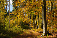 Germany, view at autumn wood - MJ000430