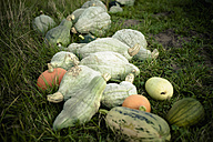 Pumpkins lying on ground - MJ000403
