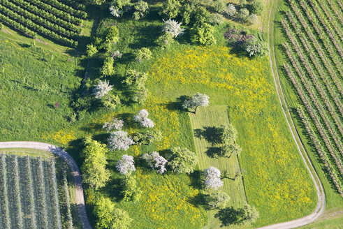 Germany, Baden-Wurttemberg, Markdorf, Aerial view of fields and fruit trees - SH001096
