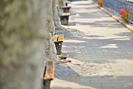 Germany, Baden-Wurttemberg, Meersburg, Benches under the trees of the waterfront promenade - SH001090