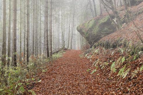 Austria, Styria, trail near Weiz - GFF000314