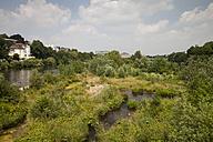Germany, North Rhine-Westphalia, Muelheim an der Ruhr, Nature reserve Saarn-Mendener Ruhraue - WI000213