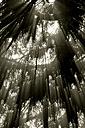 Germany, North Rhine-Westphalia, Minden, fog forest - HOH000268