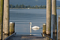 Germany, Baden-Wurttenberg, Allensbach, Swan near shipping pier at Lake Constance - SH001185