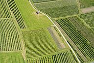Germany, baden-Wurttenberg, Aerial view fruit plantations near Kressbronn - SH001118