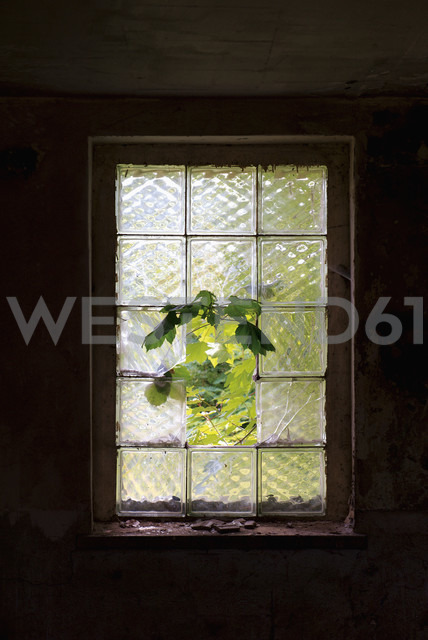Germany, Brandenburg, Wustermark, Olympic village 1936, branch growing through broken glass panel of decaying military building - VI000073