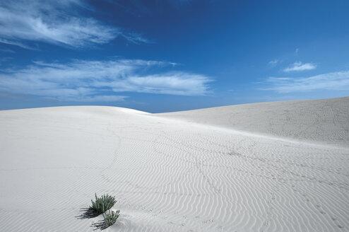 Spain, Fuerteventura, Corralejo, Parque Natural de Corralejo, view of sand dune - VI000168