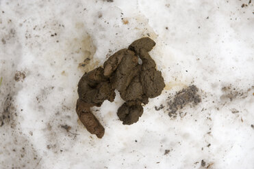 Dog poop at dirty snow - VI000111