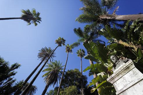 Portugal, Lisbon, Jardim Botanico, palms, bust of Bernadino Gomes - BI000175