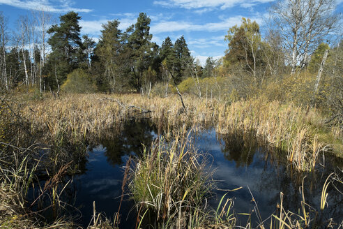 Germany, Baden Wuerttemberg, Villingen-Schwenningen, Schwenninger Moos Nature Reserve - EL000688